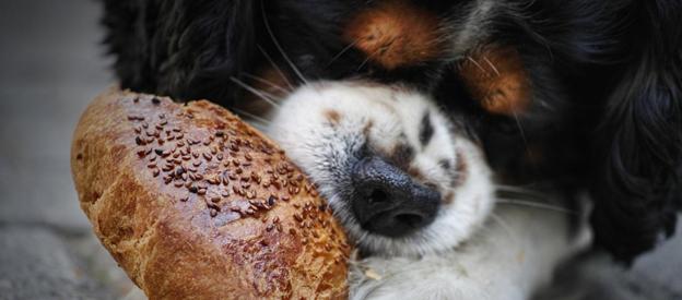 taste bread know bread