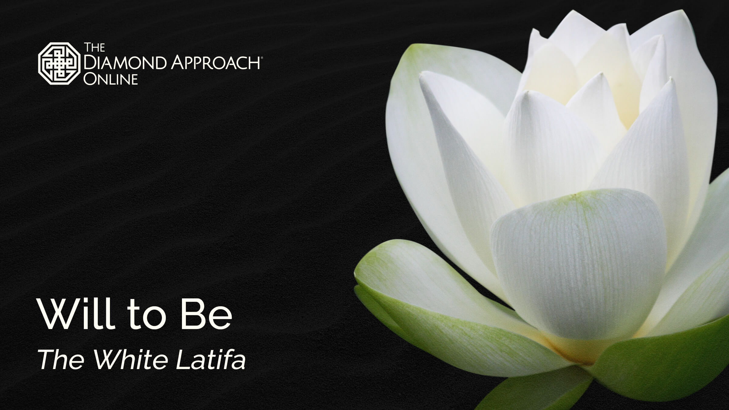 Will to Be: The White Latifa