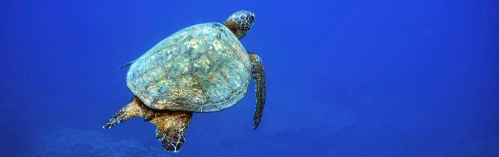 diving into ocean inquiry