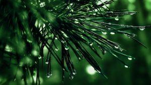 compassion truth green rain